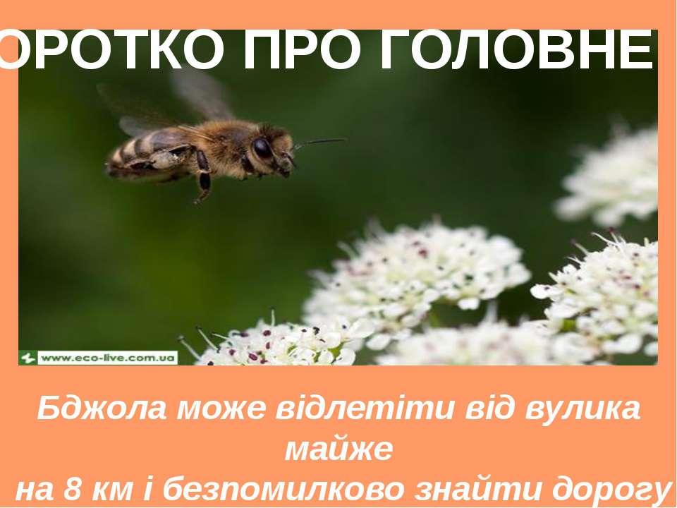 Бджола може відлетіти від вулика майже на 8 км і безпомилково знайти дорогу н...
