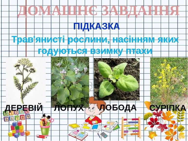 ДОМАШНЄ ЗАВДАННЯ ПІДКАЗКА Трав'янисті рослини, насінням яких годуються взимку...