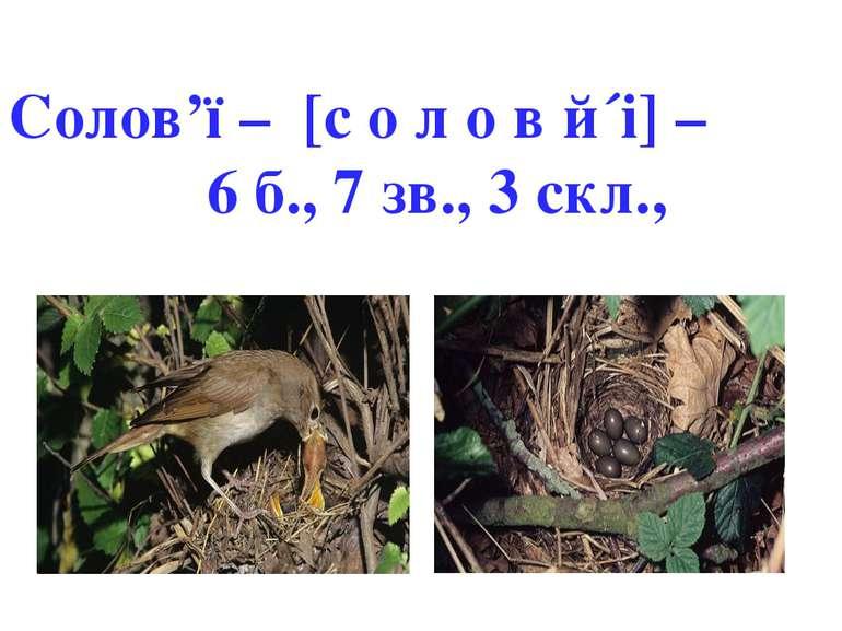 Солов'ї – [с о л о в й´і] – 6 б., 7 зв., 3 скл.,