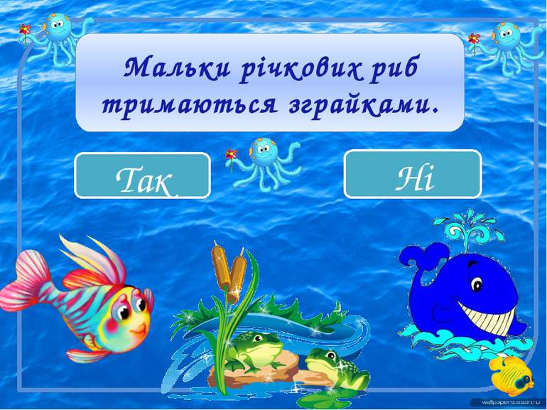 Так Ні Мальки річкових риб тримаються зграйками.
