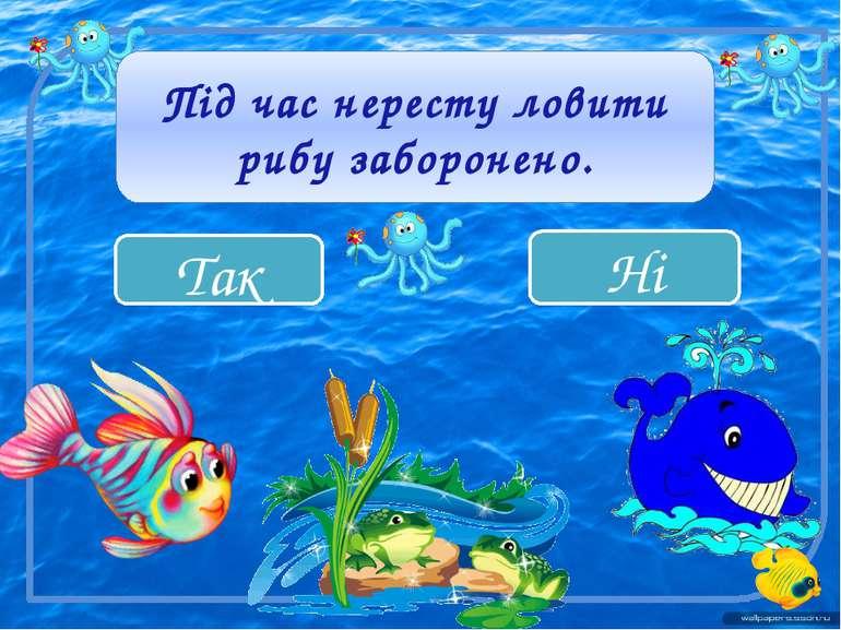 Так Ні Під час нересту ловити рибу заборонено.