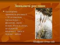 Зникаючі рослини Багаторічна травяниста рослина 8 – 30 см висотою. Квітки блі...