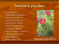 Зникаючі рослини Багаторічна травяниста рослина висотою до 50 см. Листя розсі...