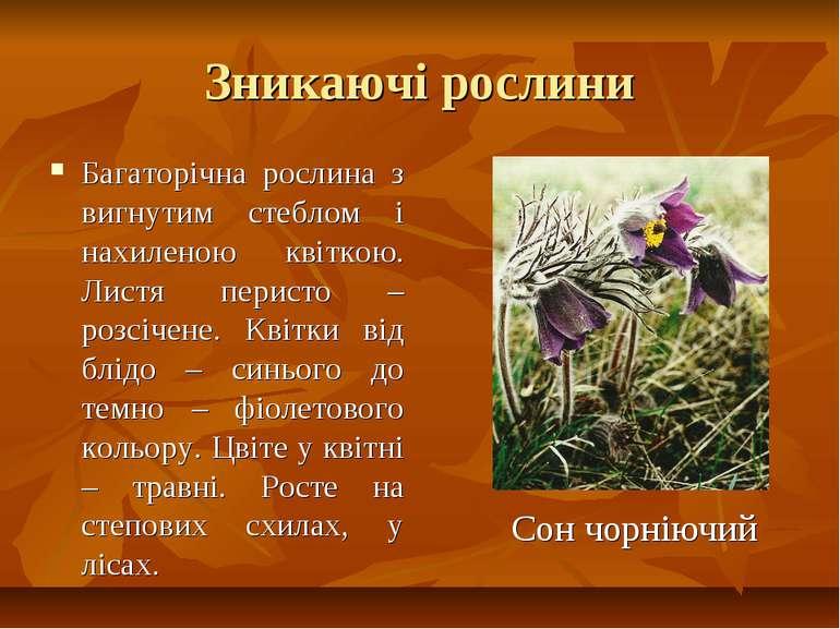 Зникаючі рослини Багаторічна рослина з вигнутим стеблом і нахиленою квіткою. ...