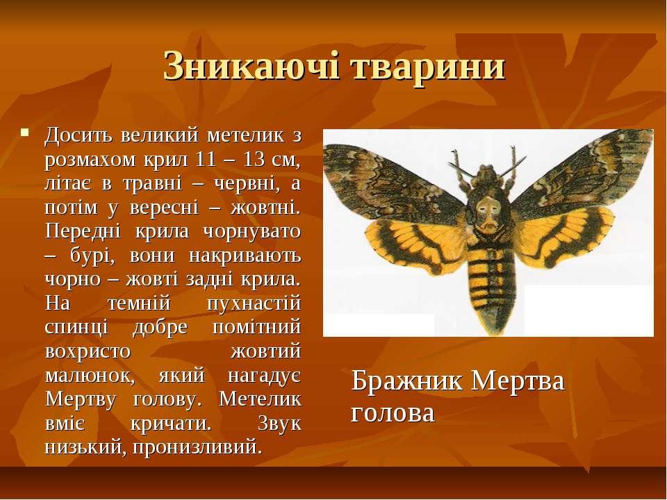 Зникаючі тварини Досить великий метелик з розмахом крил 11 – 13 см, літає в т...