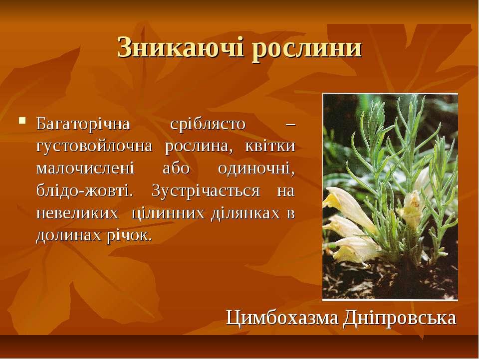 Зникаючі рослини Багаторічна сріблясто –густовойлочна рослина, квітки малочис...