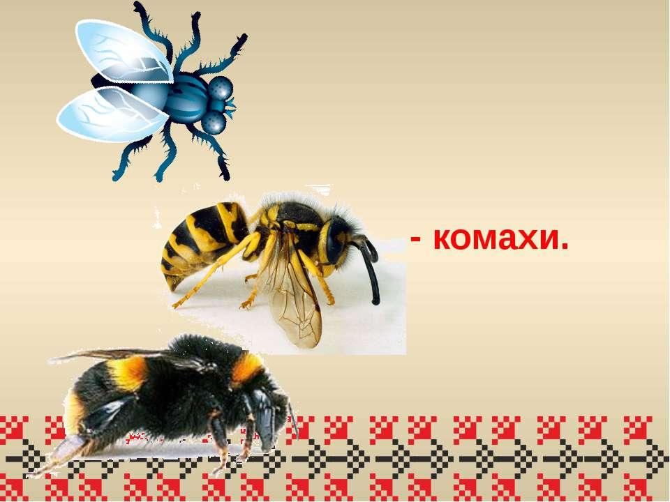- комахи.
