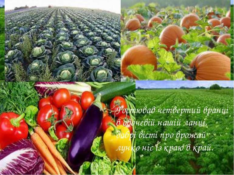 Гостював четвертий вранці в овочевій нашій ланці, добрі вісті про врожай лунк...