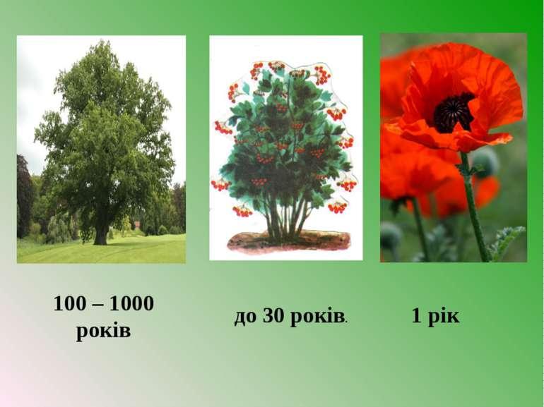 100 – 1000 років до 30 років. 1 рік