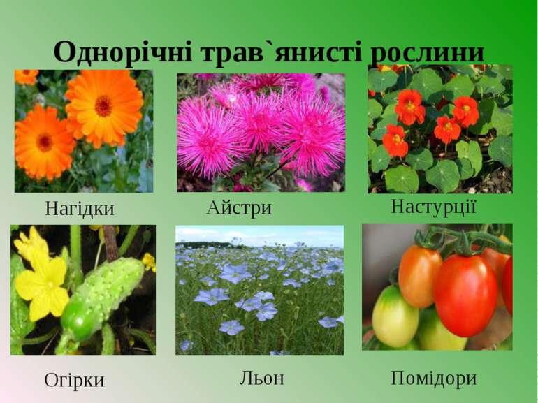 Огірки Льон Помідори Настурції Айстри Нагідки Однорічні трав`янисті рослини