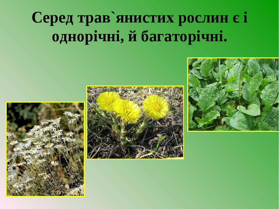 Серед трав`янистих рослин є і однорічні, й багаторічні. *