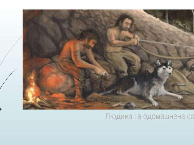 Людина та одомашнена собака