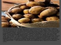 У Росію картопля потрапила наприкінці XVII століття за Петра I з Голландії. Є...