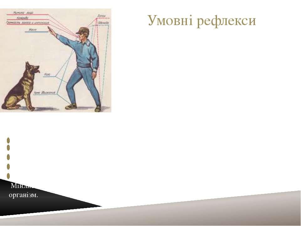 Умовні рефлекси Умо вний рефле кс—рефлекс, який виробляється за певних умов...