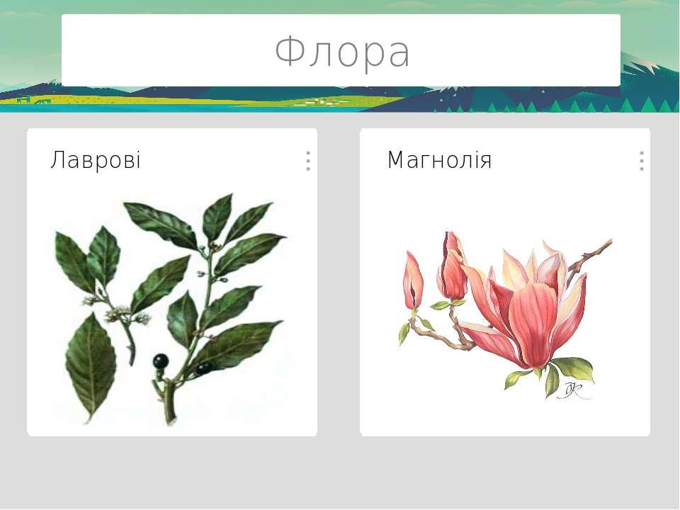 Флора Гінкго Білоба Метасеквойя Даурська модрина Корейський кедр