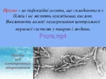 Пріони – це інфекційні агенти, що складаються з білків і не містять нуклеїнов...