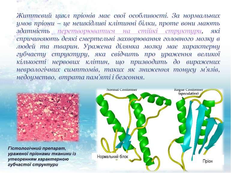 Нормальний білок Пріон