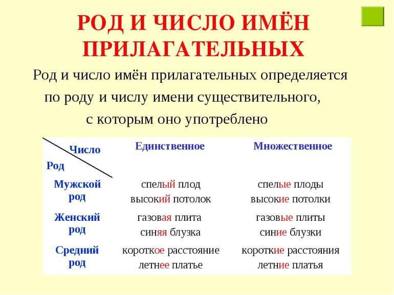 РОД И ЧИСЛО ИМЁН ПРИЛАГАТЕЛЬНЫХ Род и число имён прилагательных определяется ...