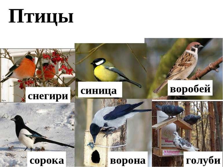 Птицы снегири синица воробей ворона сорока голуби