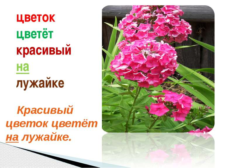 цветок цветёт красивый на лужайке Красивый цветок цветёт на лужайке. У нас ес...