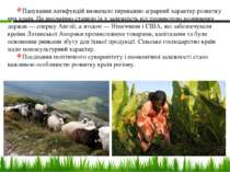 Панування латифундій визначало переважно аграрний характер розвитку цих країн...