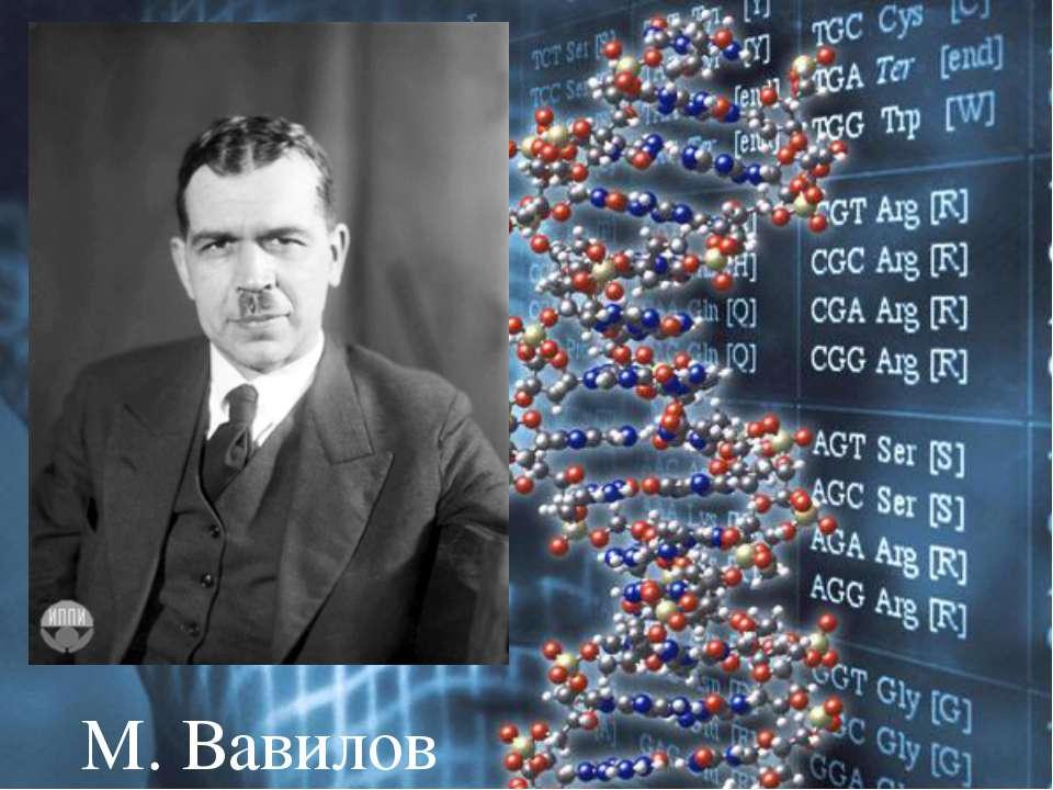 М. Вавилов