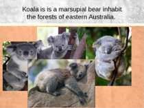 Koala is is a marsupial bear inhabit the forests of eastern Australia.