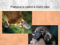 Platypus is called a God's joke