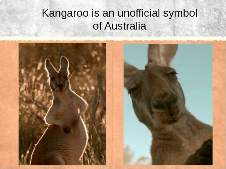 Kangaroo is an unofficial symbol of Australia