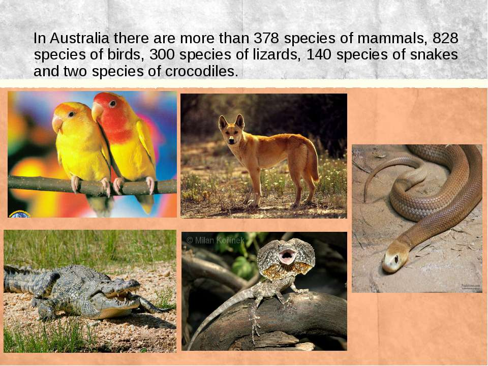 In Australia there are more than 378 species of mammals, 828 species of birds...
