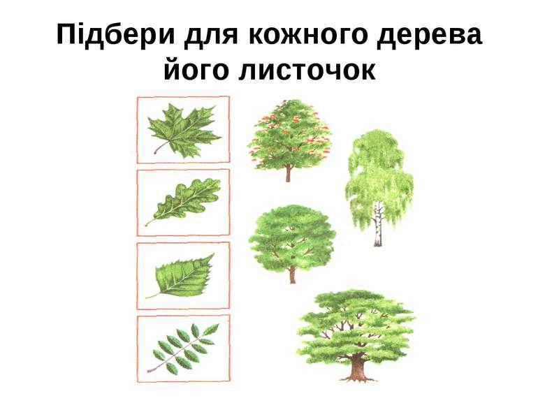 Підбери для кожного дерева його листочок