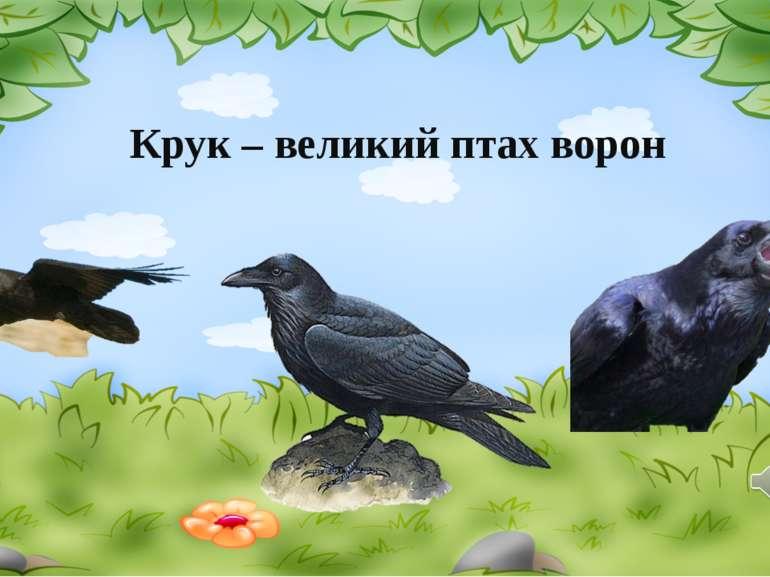 Крук – великий птах ворон