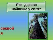 Яка рослина України найсолодша? цукровий буряк