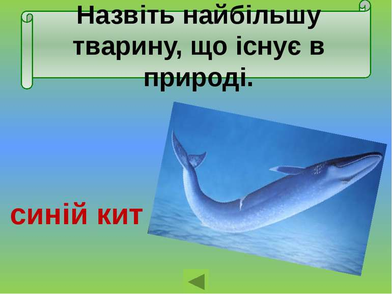 Назвіть найбільшу тварину, що існує в природі. синій кит