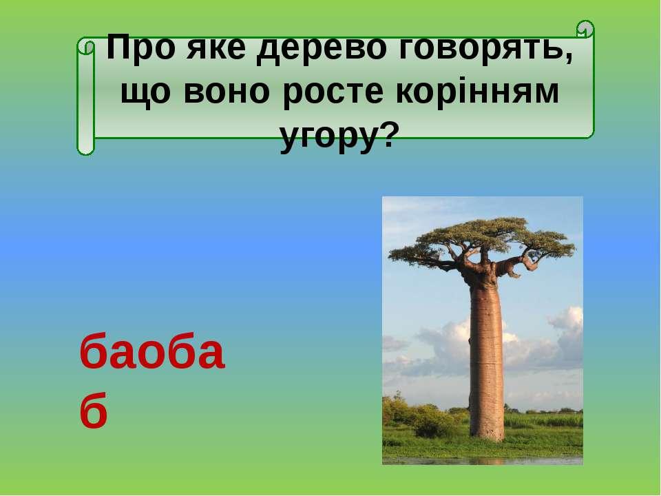 Які з тварин рослиноїдні?