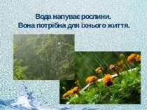 Вода напуває рослини. Вона потрібна для їхнього життя.