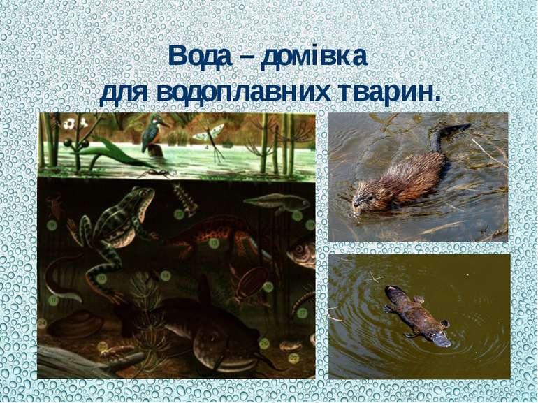 Вода – домівка для водоплавних тварин.