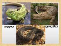 ящірка крокодил змія