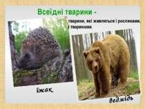 Всеїдні тварини - тварини, які живляться і рослинами, і тваринами. їжак ведмідь