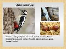 Навесні і влітку поїдають різних комах та їх личинок. Взимку і восени переваж...