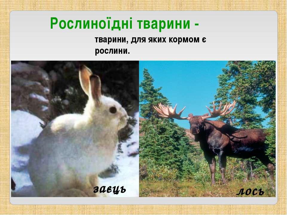 Рослиноїдні тварини - заєць лось тварини, для яких кормом є рослини.