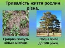Тривалість життя рослин різна. Грицики живуть кілька місяців. Сосна живе до 5...