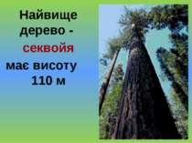 Найвище дерево - секвойя має висоту 110 м