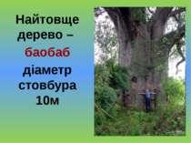 Найтовще дерево – баобаб діаметр стовбура 10м