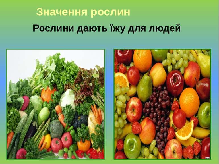 Рослини дають їжу для людей Значення рослин