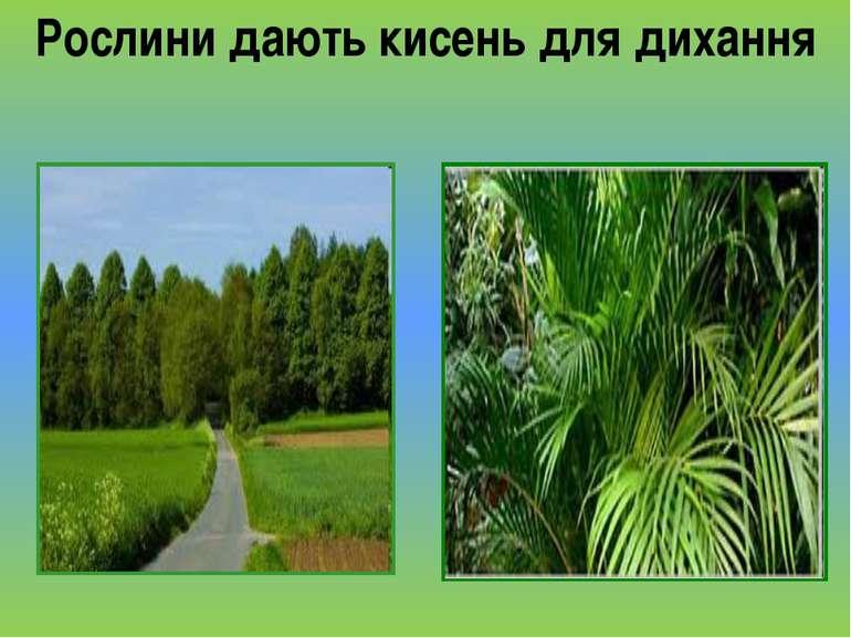 Рослини дають кисень для дихання