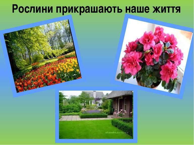 Рослини прикрашають наше життя