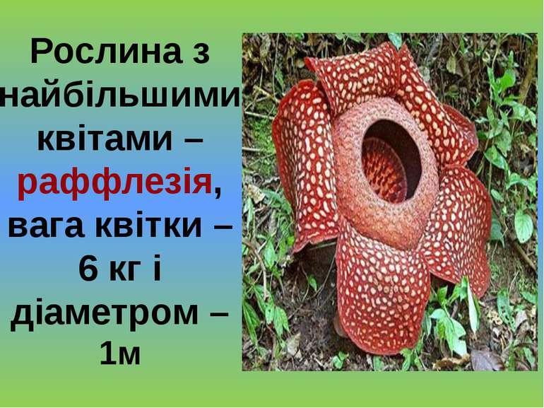 Рослина з найбільшими квітами – раффлезія, вага квітки – 6 кг і діаметром – 1м