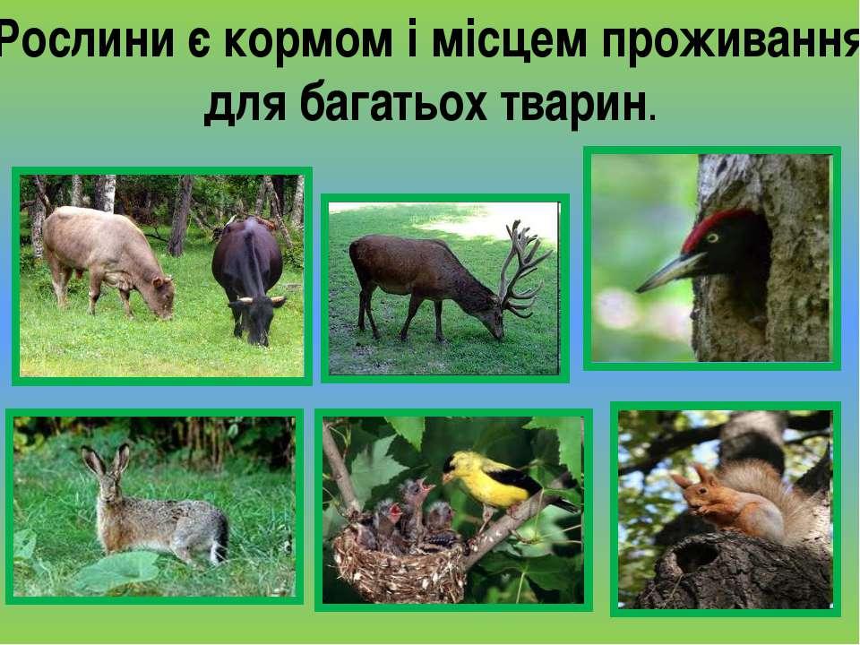 Рослини є кормом і місцем проживання для багатьох тварин.