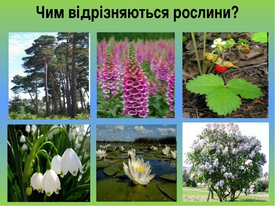 Чим відрізняються рослини?